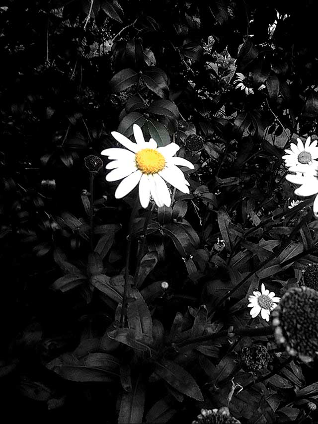 A-splash-of-Daisy-by-Leigha-Barker
