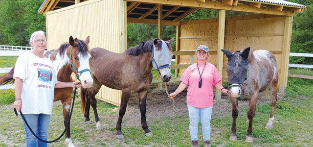 Mission Possible: Local church builds riding arena and run-in shed for horses