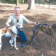 Gone to the dogs: Greyhounds reap benefit of Deane's volunteer work