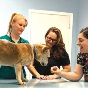 Lively atmosphere at new veterinary office